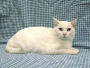 ***Adopted!***  Snowflake.