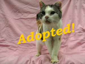***Adopted!*** Sophie