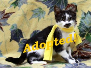 ***Adopted!*** Gideon