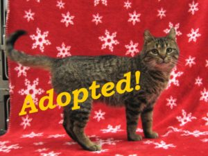 katie-adopted