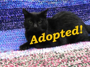 ***Adopted!*** Obsidian