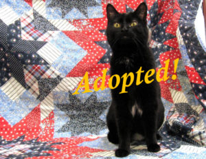 ***Adopted!***  Dolly