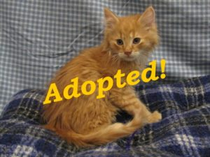 ***Adopted!*** Tabasco