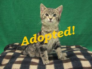 ***Adopted!***  Pipsqueak