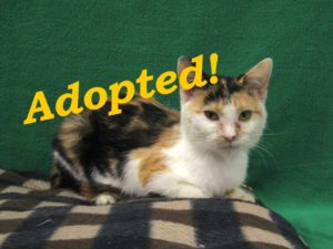 ***Adopted!***  Skittles