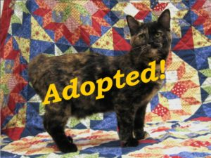 ***Adopted!***  Truffles