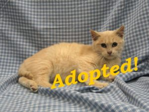 ***Adopted!***  Buttermilk