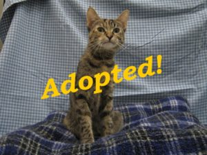 ***Adopted!***  Camie