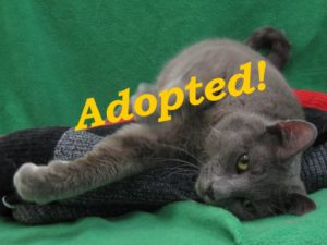 ***Adopted!***  Denim