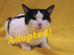 ***Adopted!***  Domino