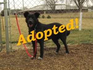 ***Adopted!***  Maisy