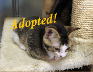 ***Adopted!***  Claudette