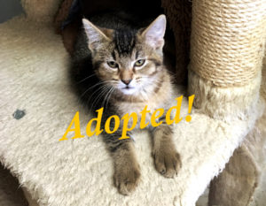 ***Adopted!***  Toffee