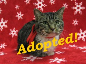 ***Adopted!***  Asia