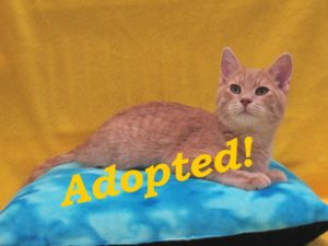 ***Adopted!***  Biscuit