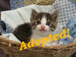 ***Adopted!***  Bryce