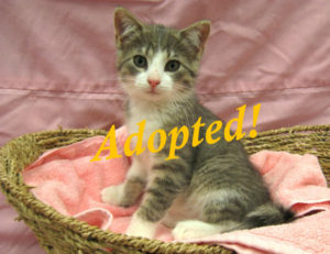 ***Adopted!***  Calliope