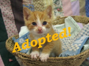 ***Adopted!***  Chevron