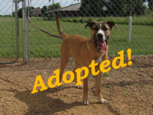 ***Adopted!***  Chief