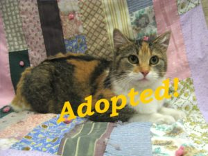 ***Adopted!***  Coco