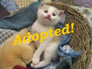 ***Adopted!***  Cracker