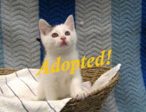 ***Adopted!***  Duncan