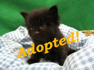 ***Adopted!***  Eddie Munster