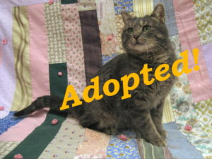 ***Adopted!***  Fergie