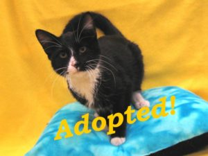 ***Adopted!***  Figaro