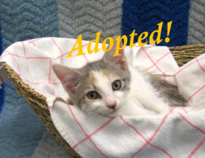 ***Adopted!***  Flora