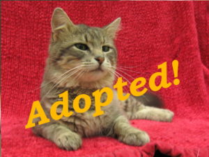 ***Adopted!***  Gus