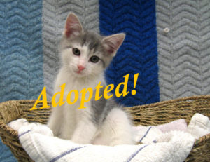 ***Adopted!***  Magee