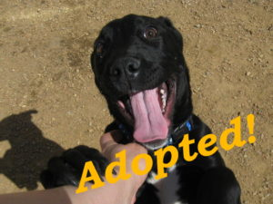 ***Adopted!***  Mickey