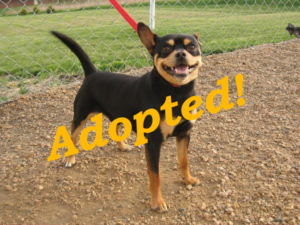 ***Adopted!***  Odie