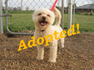 ***Adopted!***  Shaggy