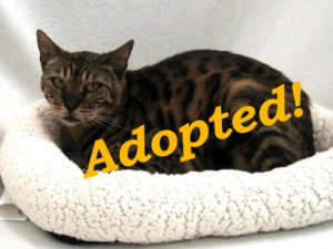 ***Adopted!***  Silky