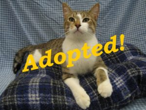 ***Adopted!***  Snickers