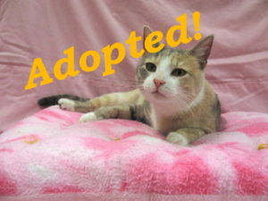 ***Adopted!***  Tippy