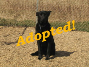 ***Adopted!*** Wifi