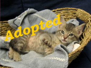 ***Adopted!***  Lightning