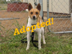 ***Adopted!*** Li'l Buddy