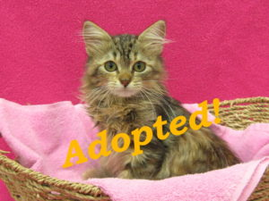 ***Adopted!*** Belle