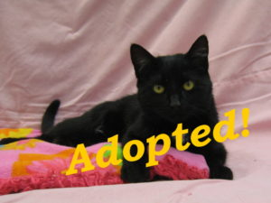 ***Adopted!*** Blissa