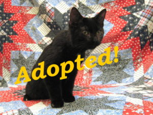 ***Adopted!*** Huckleberry