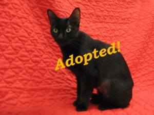 ***Adopted!*** Wolfy
