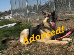 ***Adopted!*** Bella