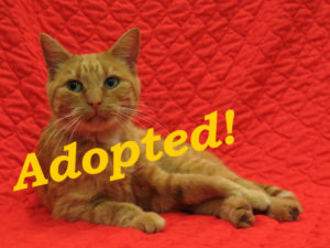 ***Adopted!*** Cassidy