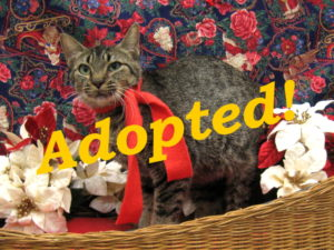 ***Adopted!*** Abigail