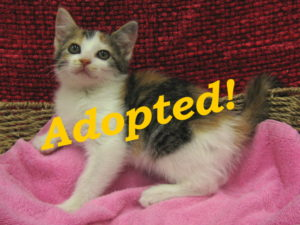 ***Adopted!*** Christa