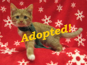 ***Adopted!***  Clifford